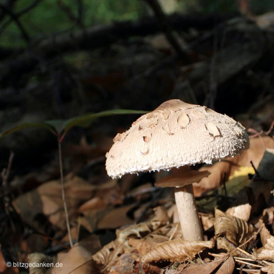 Pilz auf Lichtung I