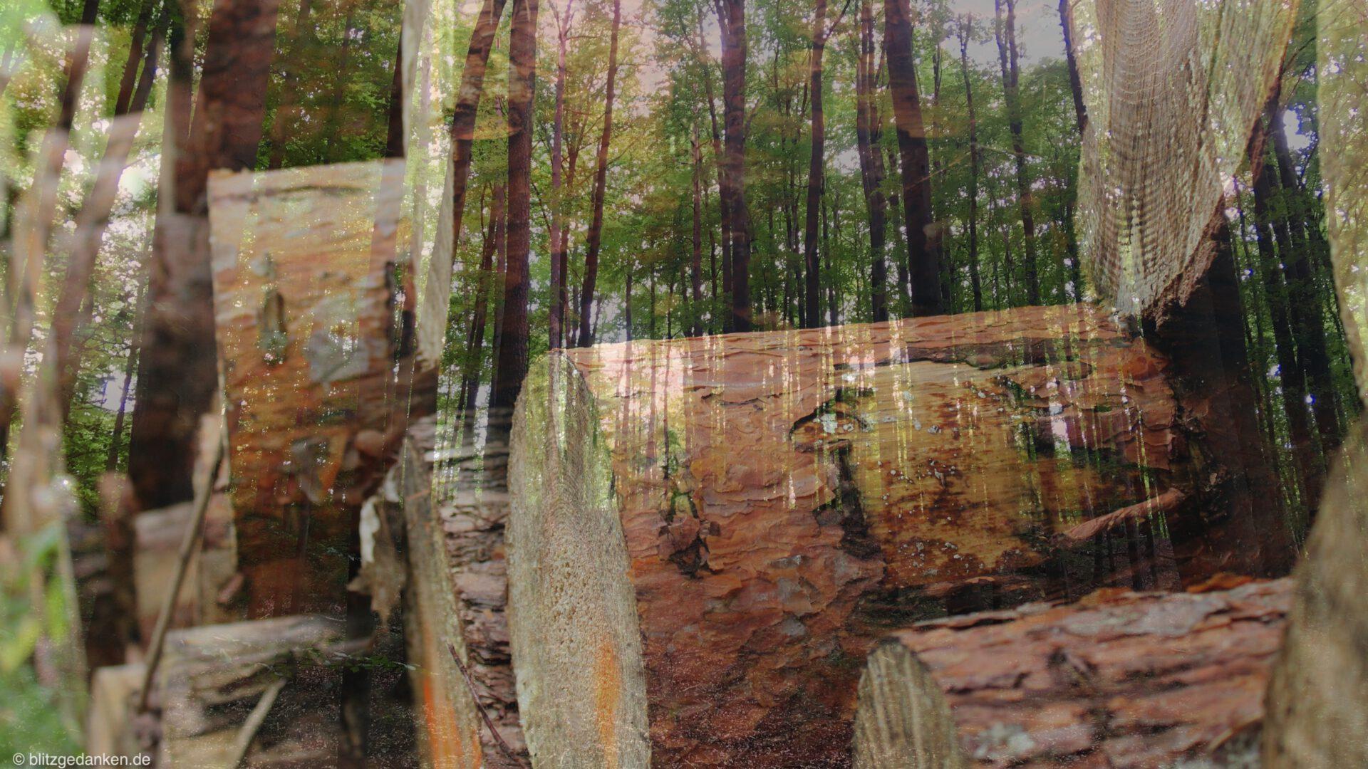 Schrödinger's forest