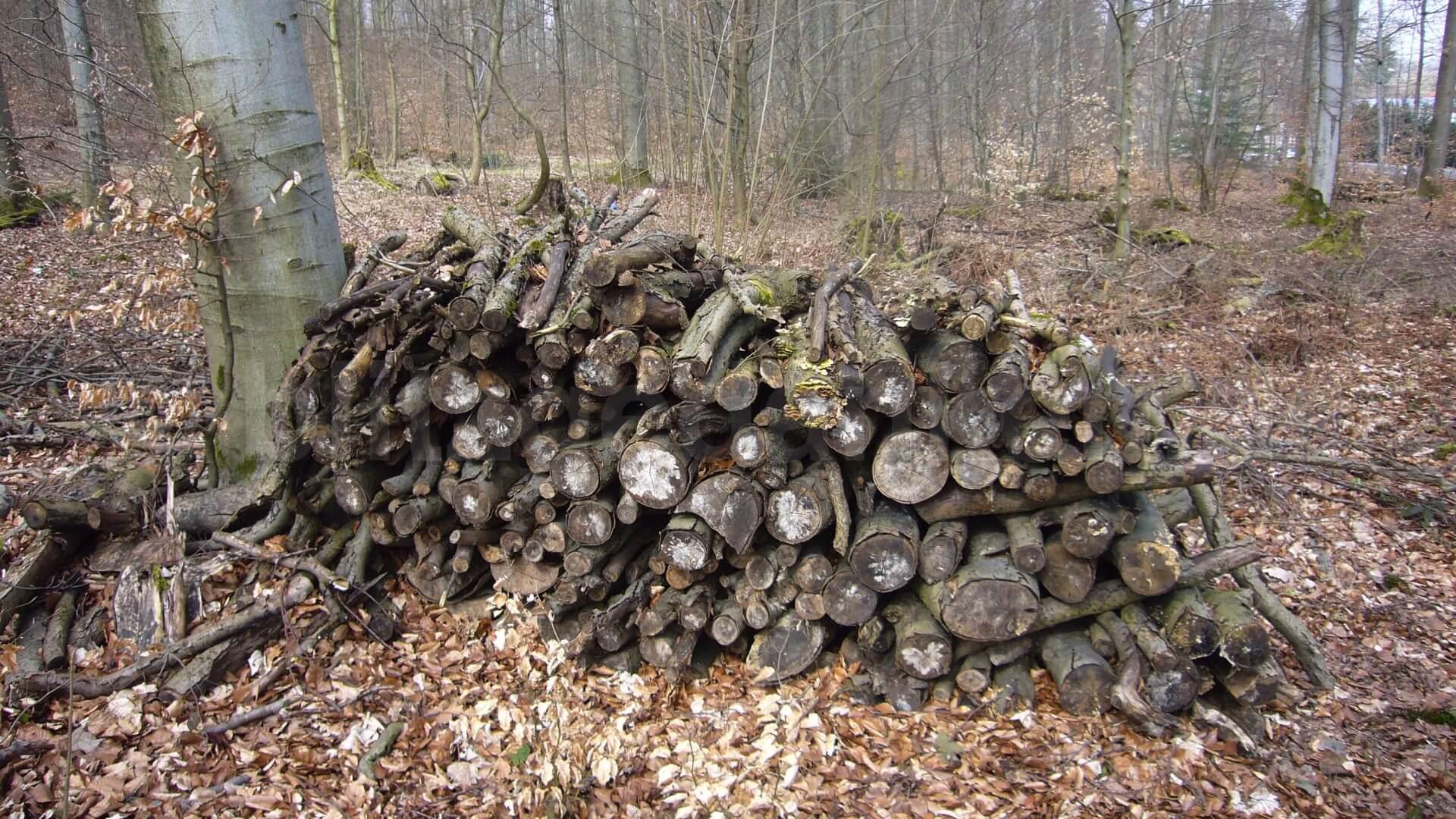 Holzscheite im Wald