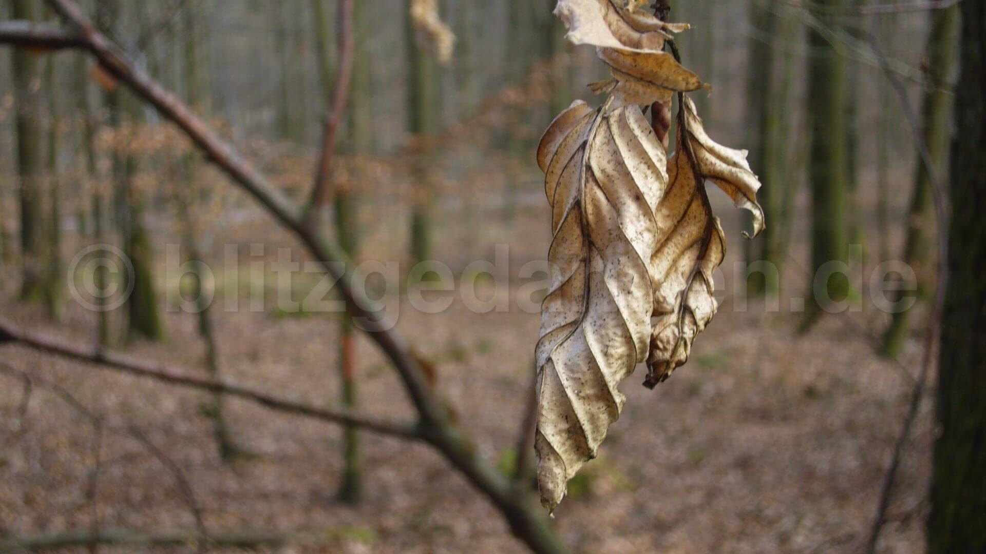beige Blätter