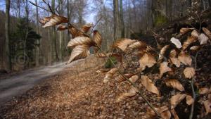 Zweig vor Waldweg