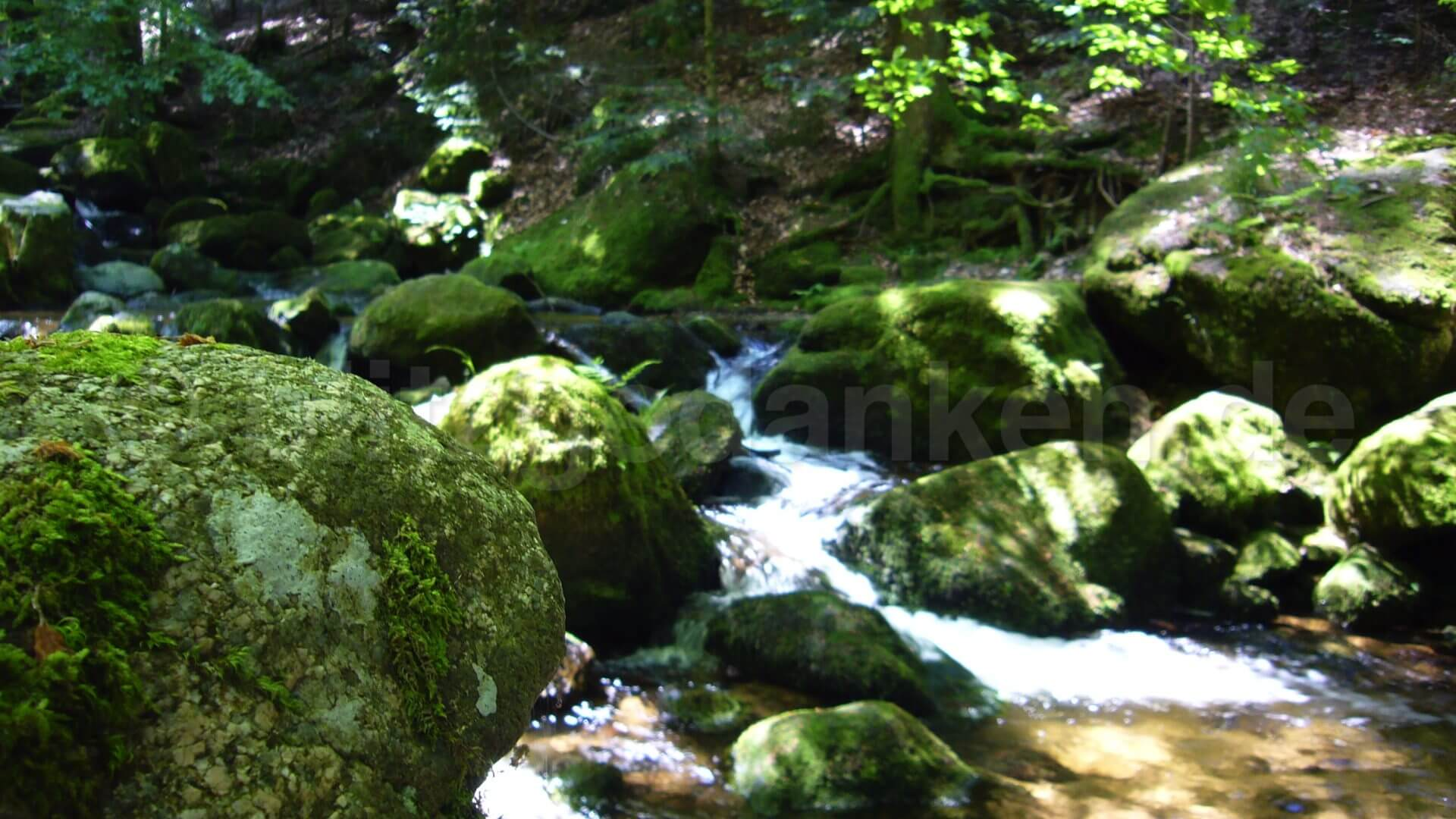 ein Bach im Wald im Sonnenschein