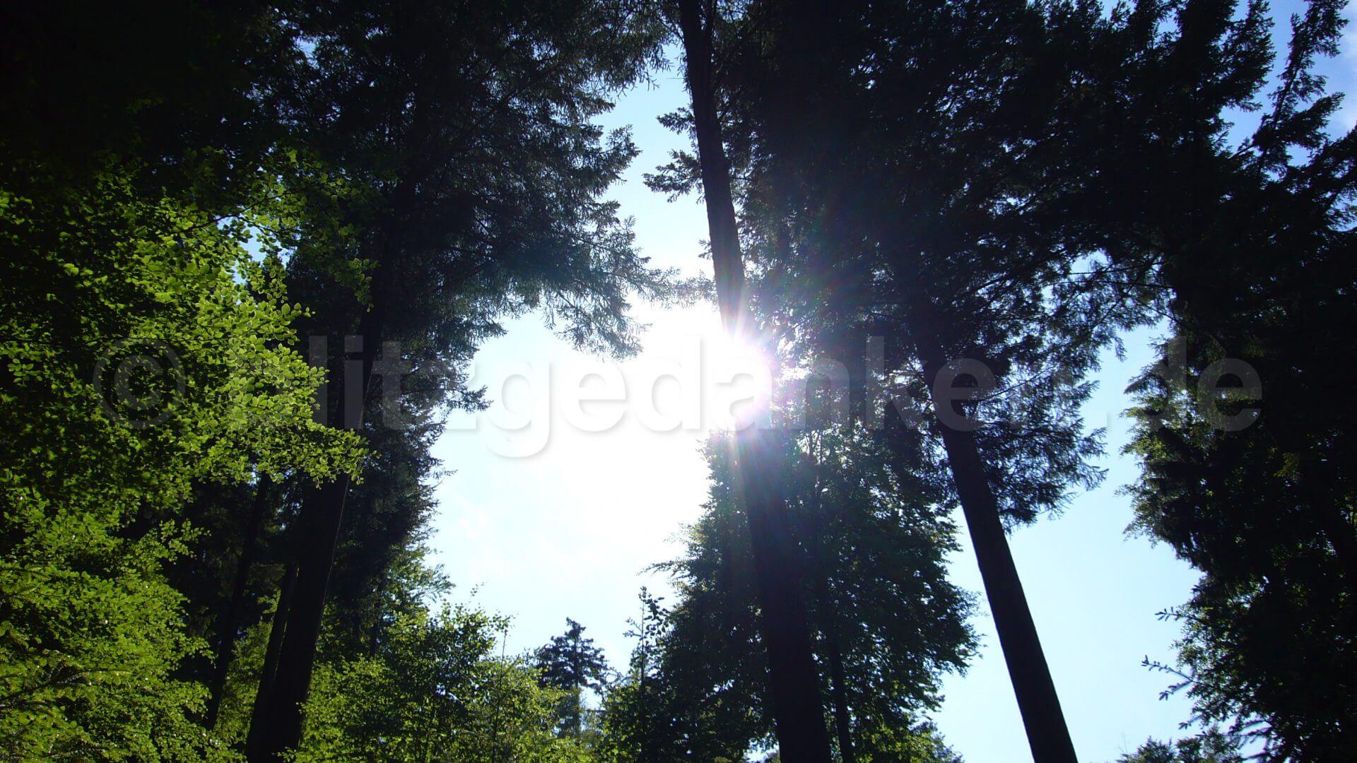 Sonne strahlt durch Bäume