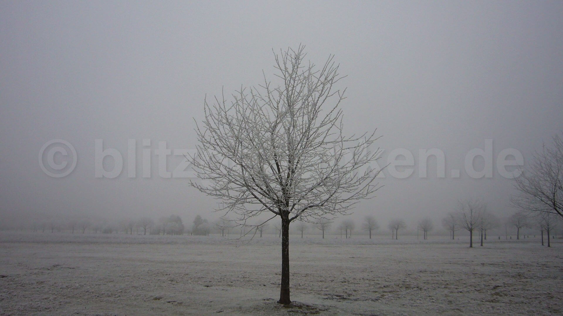 Bäume auf dem Feld im Frost