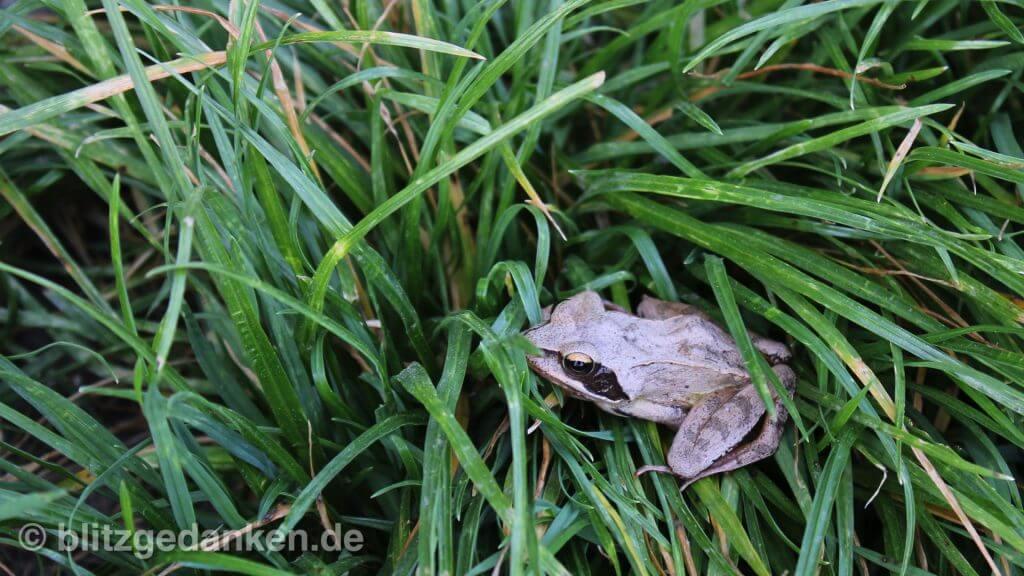 Frosch in Moorlandschaft