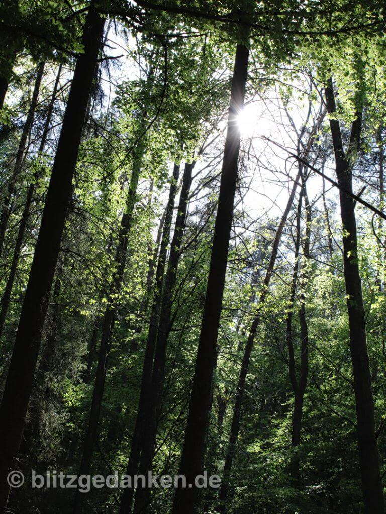 Sonne durch die Bäume