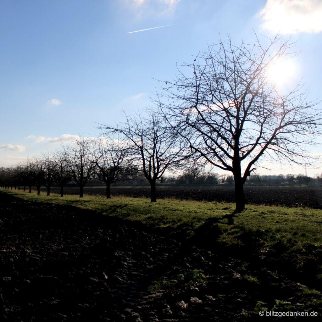 Spaziergang im Winter - Acker