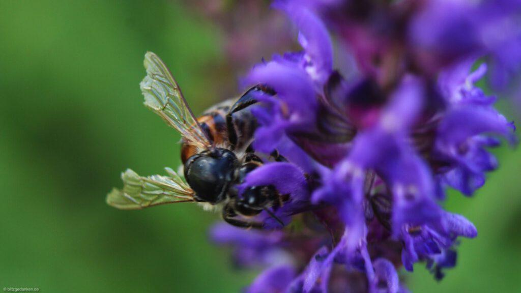 Bienen - denken sie?